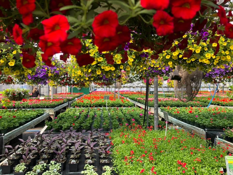 Opening Day Shopping For Proven Winners Garden Flowers At The Greenhouse