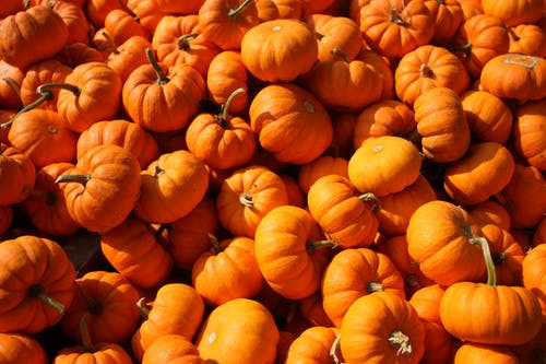 Life inside the Page Blog Pumpkins Celebrating Fall
